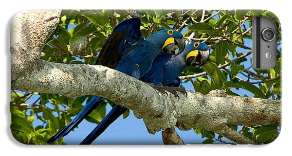 Hyacinth Macaws, Brazil IPhone 6s Plus Case by Gregory G. Dimijian, M.D.