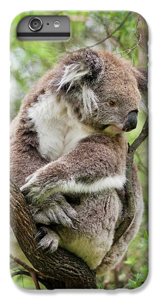 Koala (phascolarctos Cinereus IPhone 6s Plus Case