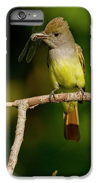 Flycatcher iPhone 6s Plus Case - North America, Usa, Central by Joe and Mary Ann Mcdonald