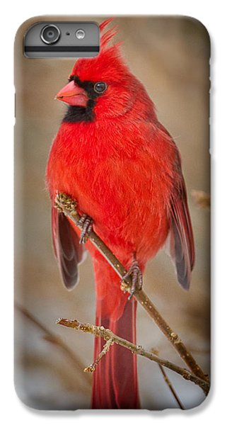 Northern Cardinal IPhone 6s Plus Case by Bill Wakeley