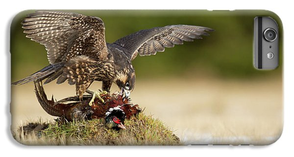 Pheasant iPhone 6s Plus Case - Peregrine Falcon by Milan Zygmunt