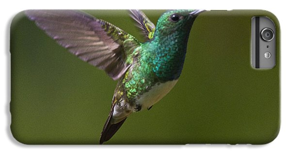 Snowy-bellied Hummingbird IPhone 6s Plus Case