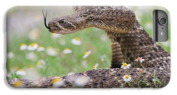 Western Diamondback Rattlesnake IPhone 6s Plus Case by Larry Ditto