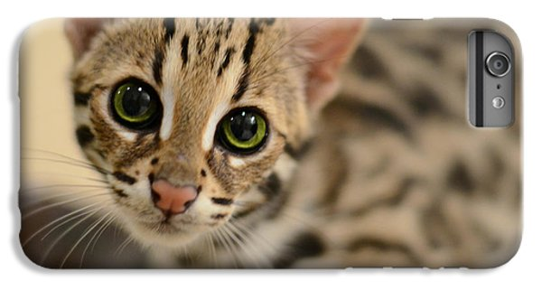 Cat iPhone 6s Plus Case - Asian Leopard Cub by Laura Fasulo