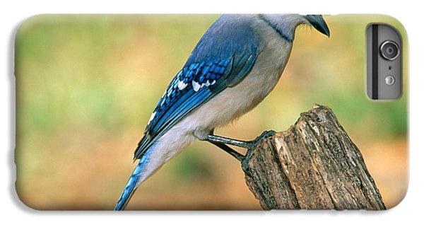 Blue Jay IPhone 6s Plus Case by Millard H. Sharp