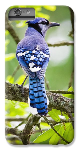 Bluejay IPhone 6s Plus Case