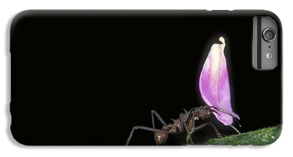 Leafcutter Ant IPhone 6s Plus Case