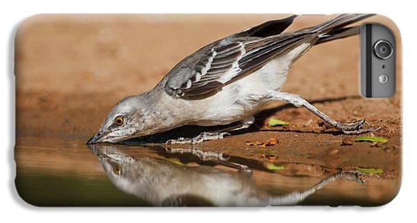 Mockingbird iPhone 6s Plus Case - Northern Mockingbird (mimus Polyglottos by Larry Ditto