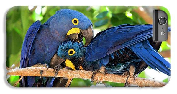 Brazil, Mato Grosso, The Pantanal IPhone 6s Plus Case