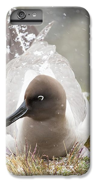 A Light Mantled Albatross IPhone 6s Plus Case by Ashley Cooper