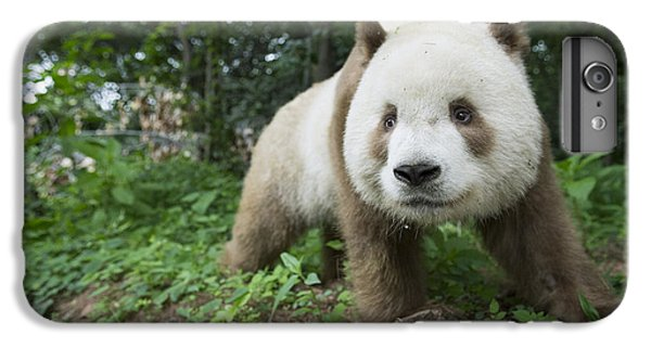 Giant Panda Brown Morph China IPhone 6s Plus Case