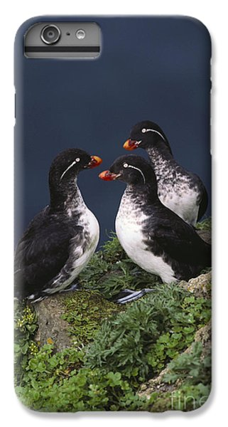 Auklets iPhone 6s Plus Case - Parakeet Auklet by Art Wolfe