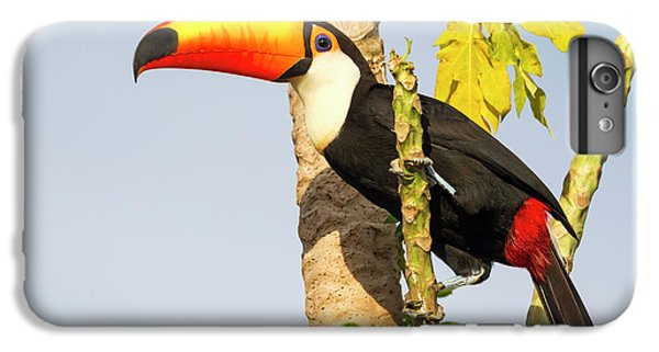 Brazil, Mato Grosso, The Pantanal, Toco IPhone 6s Plus Case