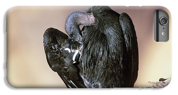 California Condor IPhone 6s Plus Case by Art Wolfe