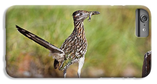 Greater Roadrunner (geococcyx IPhone 6s Plus Case