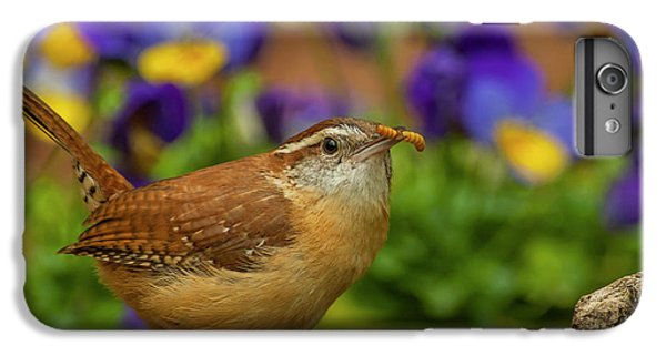 Wren iPhone 6s Plus Case - Usa, North Carolina, Guilford County by Jaynes Gallery