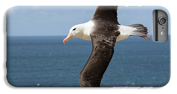 Albatross iPhone 6s Plus Case - Black-browed Albatross (thalassarche by Martin Zwick