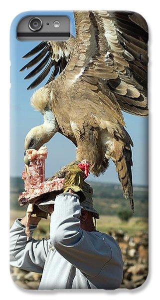 Griffon Vulture Conservation IPhone 6s Plus Case