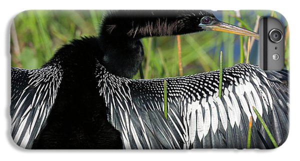 Usa, Florida, Everglades National Park IPhone 6s Plus Case