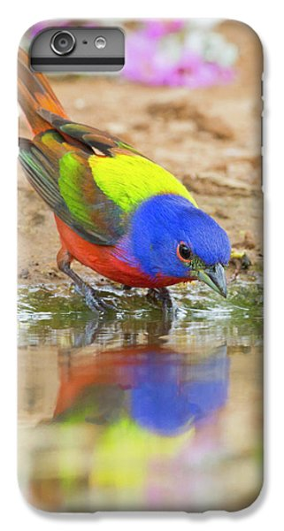 Bunting iPhone 6s Plus Case - Painted Bunting (passerina Ciris by Larry Ditto