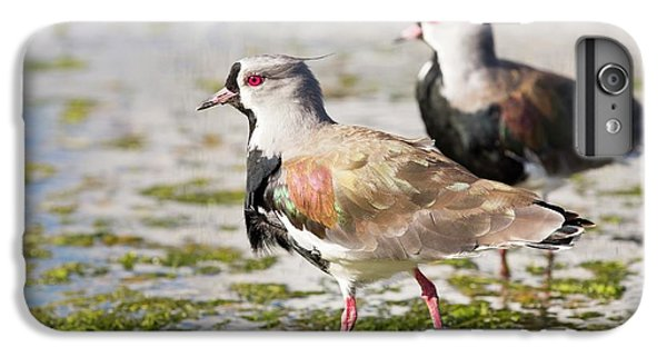 A Flock Of Southern Lapwings IPhone 6s Plus Case by Ashley Cooper