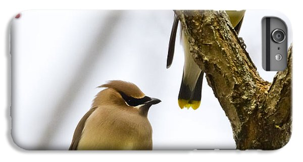 A Pair Of Cedar Waxwings IPhone 6s Plus Case by Ricky L Jones