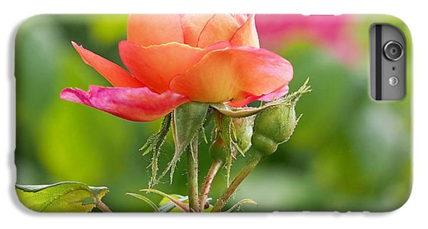 A Young Benjamin Britten Rose IPhone 6s Plus Case by Rona Black