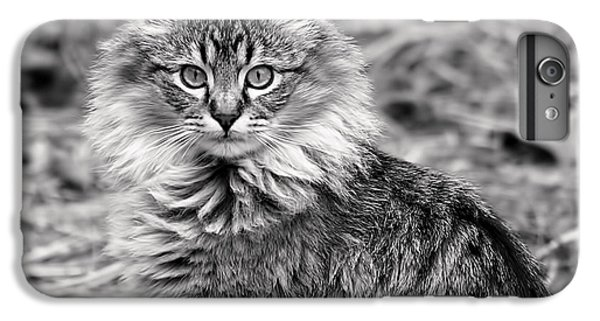 Mammals iPhone 6s Plus Case - A Young Maine Coon by Rona Black