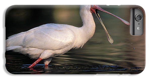 African Spoonbill IPhone 6s Plus Case by Nigel Dennis