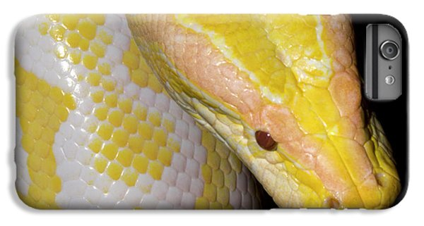 Albino Burmese Python IPhone 6s Plus Case by Nigel Downer