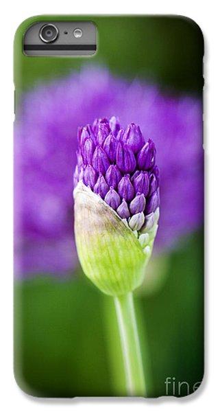Allium Hollandicum Purple Sensation IPhone 6s Plus Case by Tim Gainey