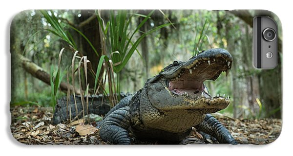 American Alligator (alligator IPhone 6s Plus Case by Pete Oxford