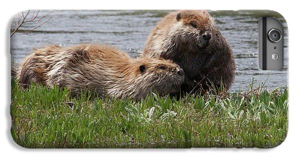 American Beaver Pair IPhone 6s Plus Case