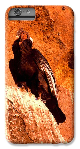 Andean Condor IPhone 6s Plus Case by Art Wolfe