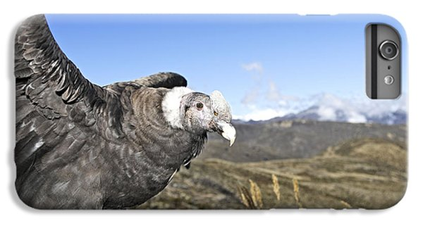 Andean Condor IPhone 6s Plus Case by M. Watson