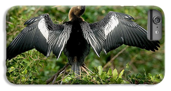 Anhinga Sunning IPhone 6s Plus Case