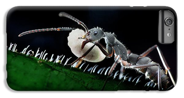 Ant Carrying Larva IPhone 6s Plus Case by Melvyn Yeo