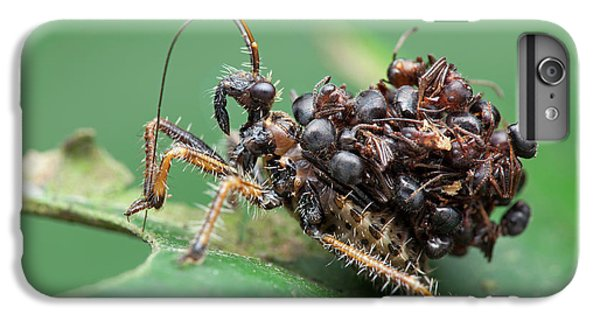 Assassin Bug Nymph With Ants IPhone 6s Plus Case by Melvyn Yeo