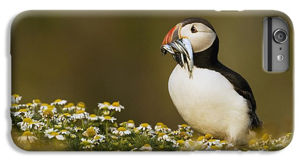 Puffin iPhone 6s Plus Case - Atlantic Puffin Carrying Fish Skomer by Sebastian Kennerknecht