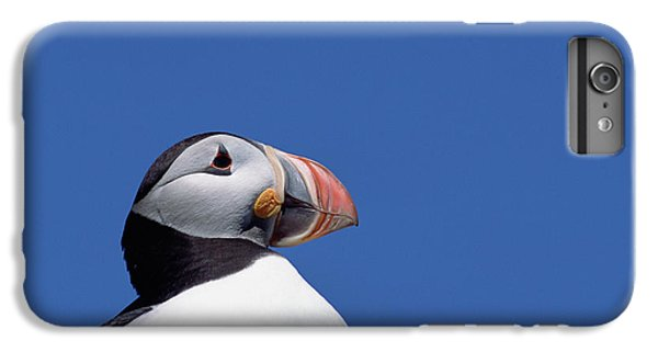 Atlantic Puffin In Breeding Colors IPhone 6s Plus Case by Yva Momatiuk and John Eastcott
