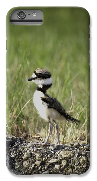 Baby Killdeer 2 IPhone 6s Plus Case by Thomas Young