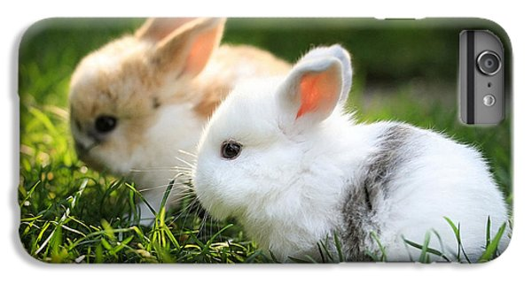 Baby Rabbits  IPhone 6s Plus Case by Marvin Blaine
