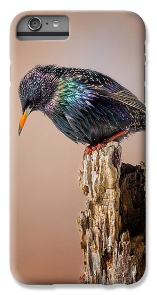 Backyard Birds European Starling IPhone 6s Plus Case by Bill Wakeley