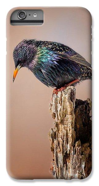 Backyard Birds European Starling IPhone 6s Plus Case by Bill Wakeley