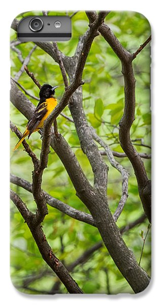 Baltimore Oriole IPhone 6s Plus Case by Bill Wakeley