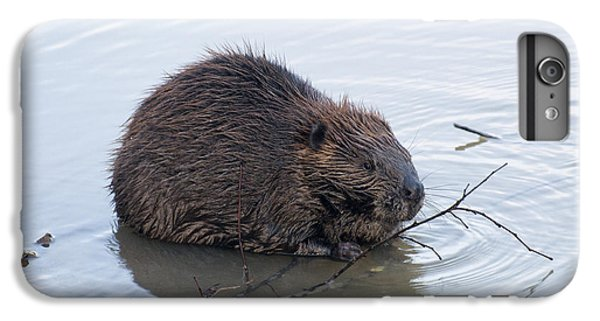 Beaver Chewing On Twig IPhone 6s Plus Case
