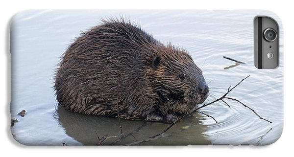 Beaver Chewing On Twig IPhone 6s Plus Case by Chris Flees