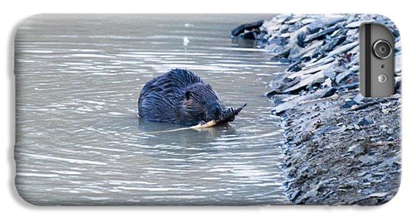 Beaver Chews On Stick IPhone 6s Plus Case