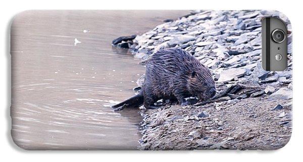 Beaver On Dry Land IPhone 6s Plus Case