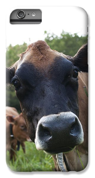 Cow iPhone 6s Plus Case - Bertha by Elizabeth Gray